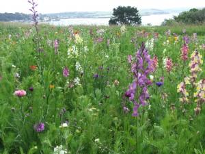 Stile Field Flowers 2015 012