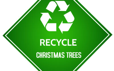 Christmas Tree Recycling Begins 11 January for Cornwall Residents